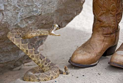 Do cowboy boots protect from snake bites?